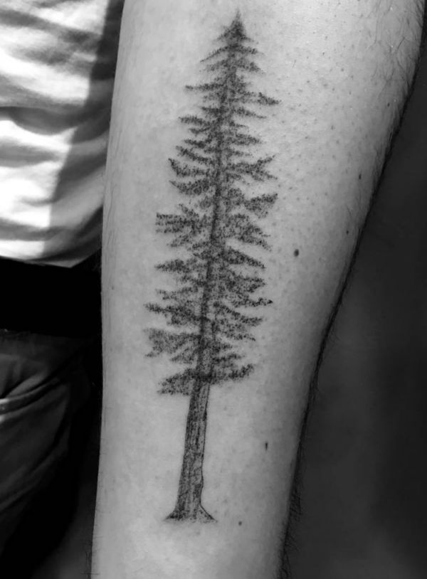Kiefer Baum Tattoo Design am Unterarm