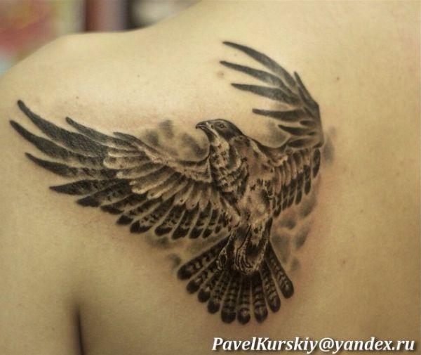 Falke Tattoo am Schulterblatt