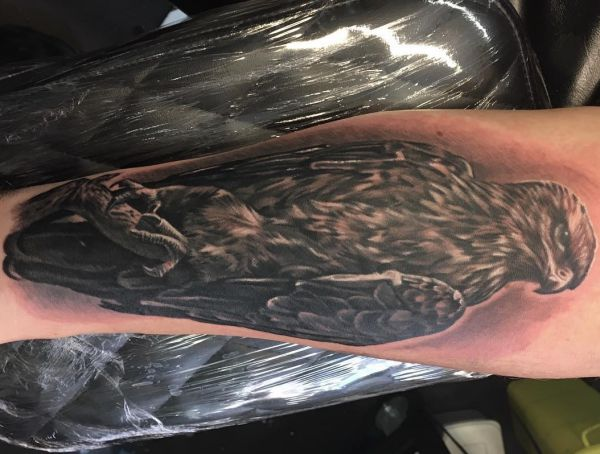 Falke Tattoo Realistische auf der Bein