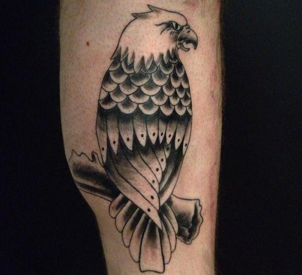 Weißkopfseeadler für das Bein